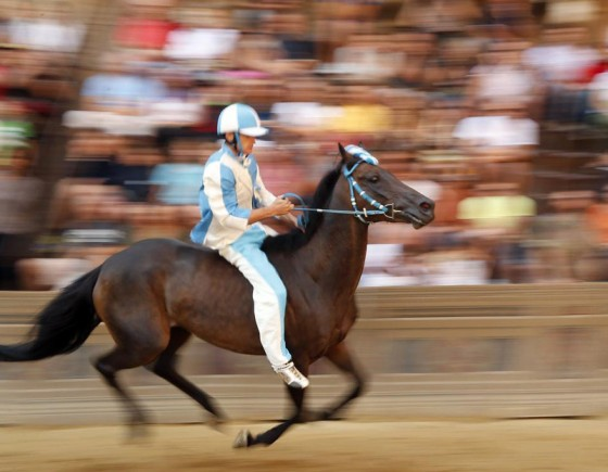 Follow Palio di Siena on August 16