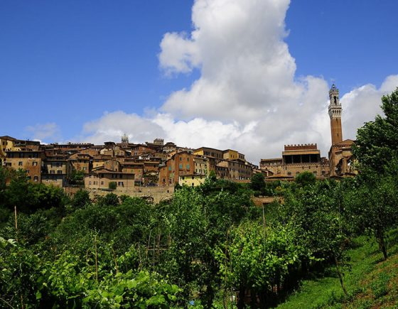 Where are the historic vineyards in Siena