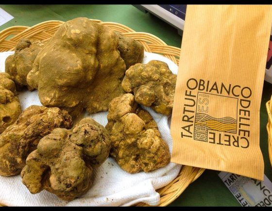 Guided tastings of white truffles close to Siena